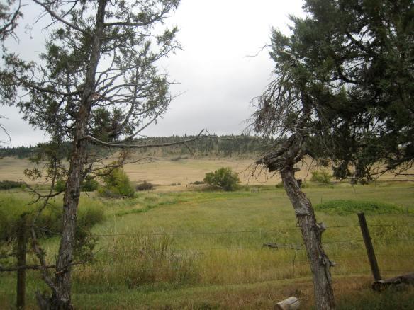 Rosebud Battlefield 035