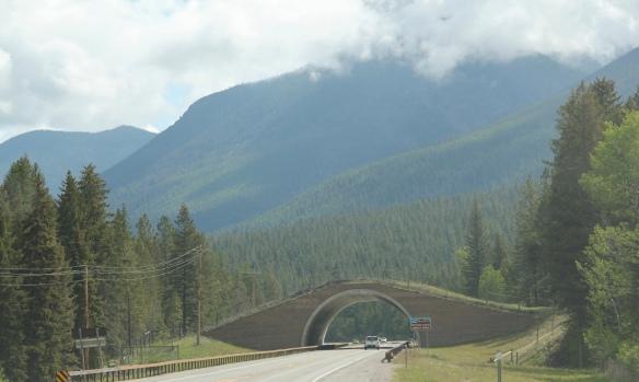 Lake Co US 93 animal bridge