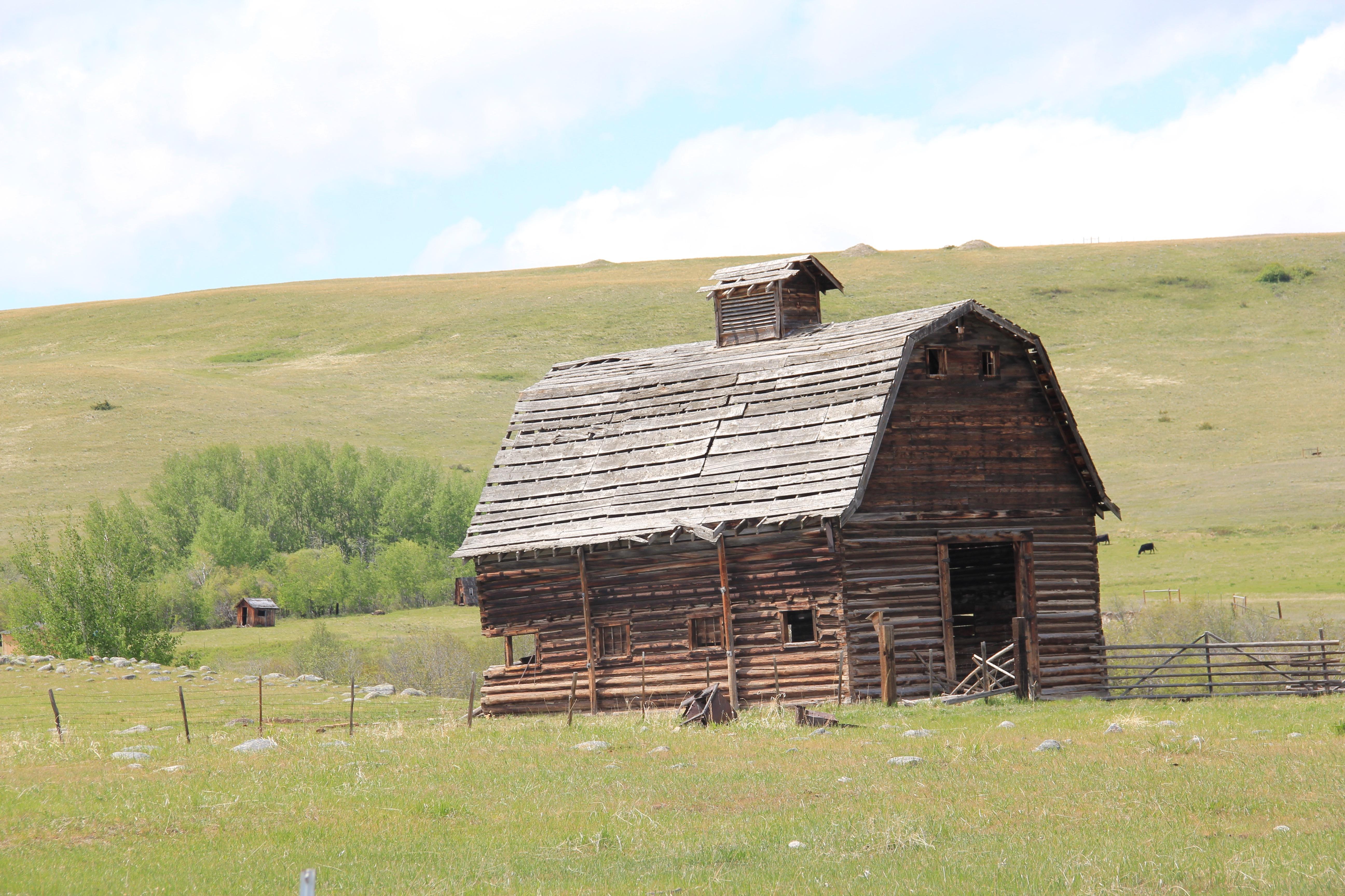 Log barn E of Pioneer, Powell Co 2